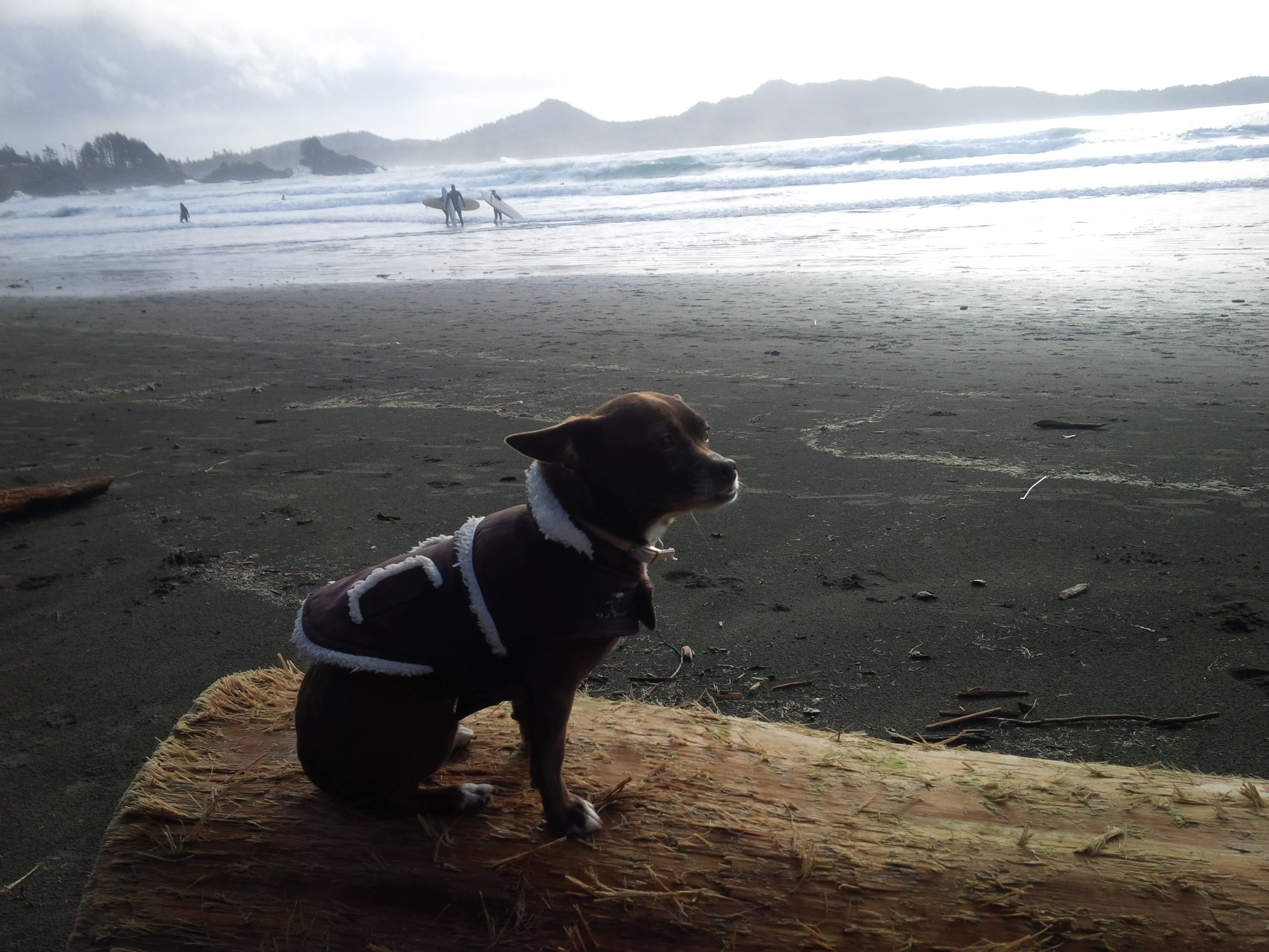 ll chestermans beach.jpg