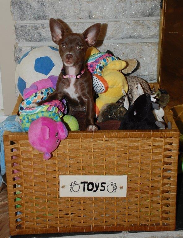 lindy toy box shelley.jpg