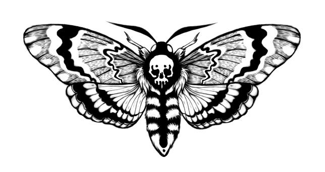 moth1_small.jpg