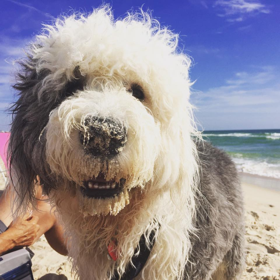 barney at beach.jpg