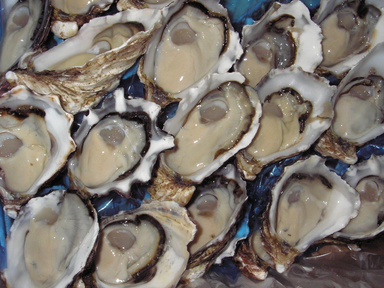 Tray of Split Melshell Oysters.jpg