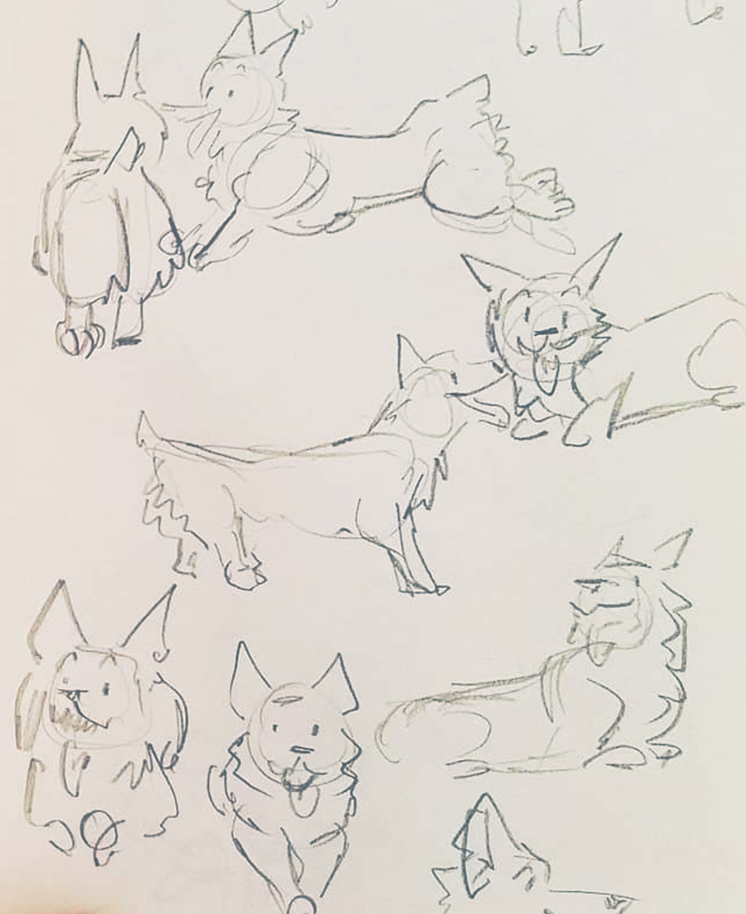 dogs1.png