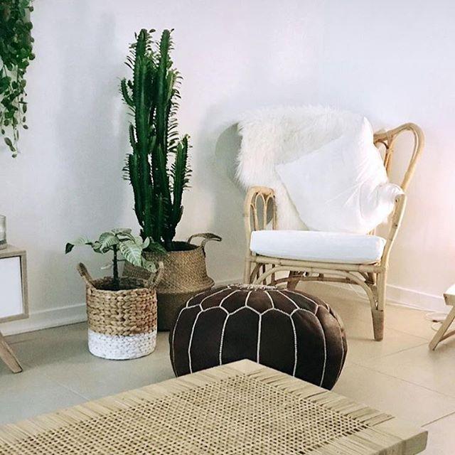 What a stunning home you've ended up in you cheeky little (big) #friendshipplant 🌵👌 thanks for sharing @authentic_spoon 😍#euphorbiatrigona #indoorplants #plantsofinstagram #plantshop #plantstyling #interiordesign #sunshinecoast