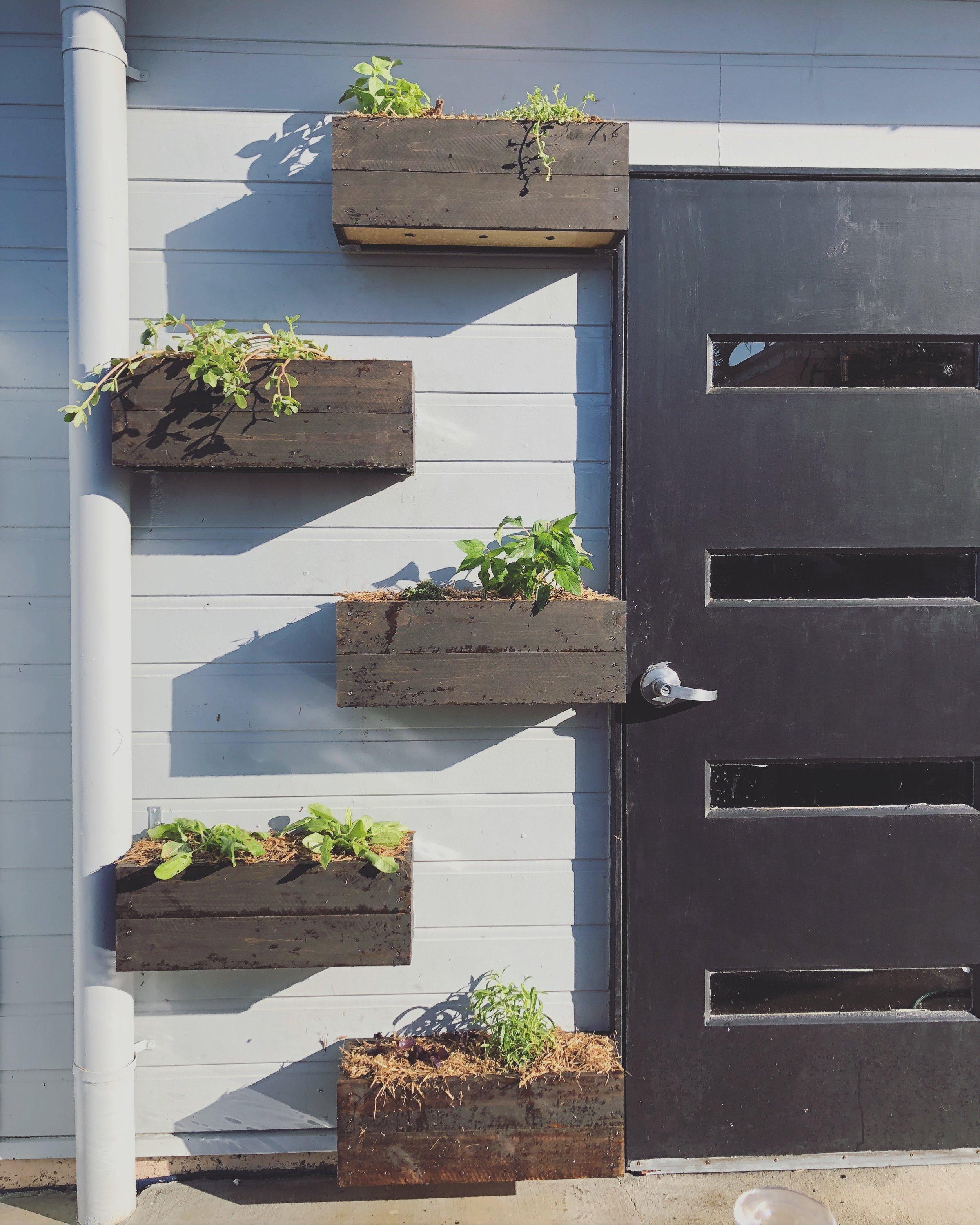 Future Wild Planter boxes.JPG