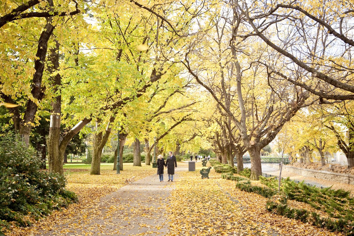 Beautiful Autumn day in Rosalind Park. Photo Credit: Explore Bendigo & Bendigo Tourism