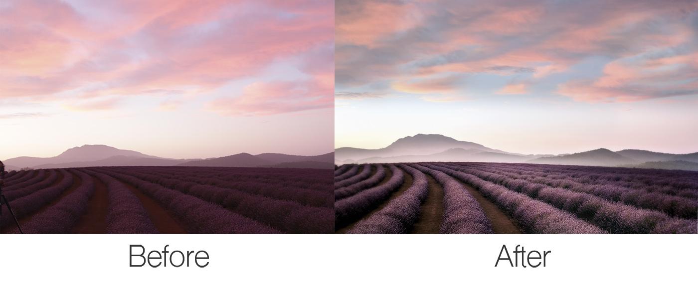 Lavender Before After.jpg