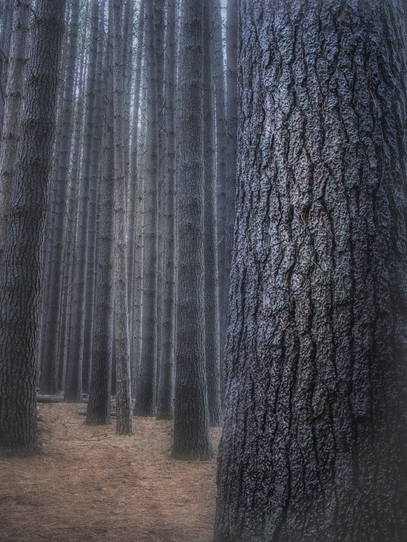 Trees tall resized.jpg