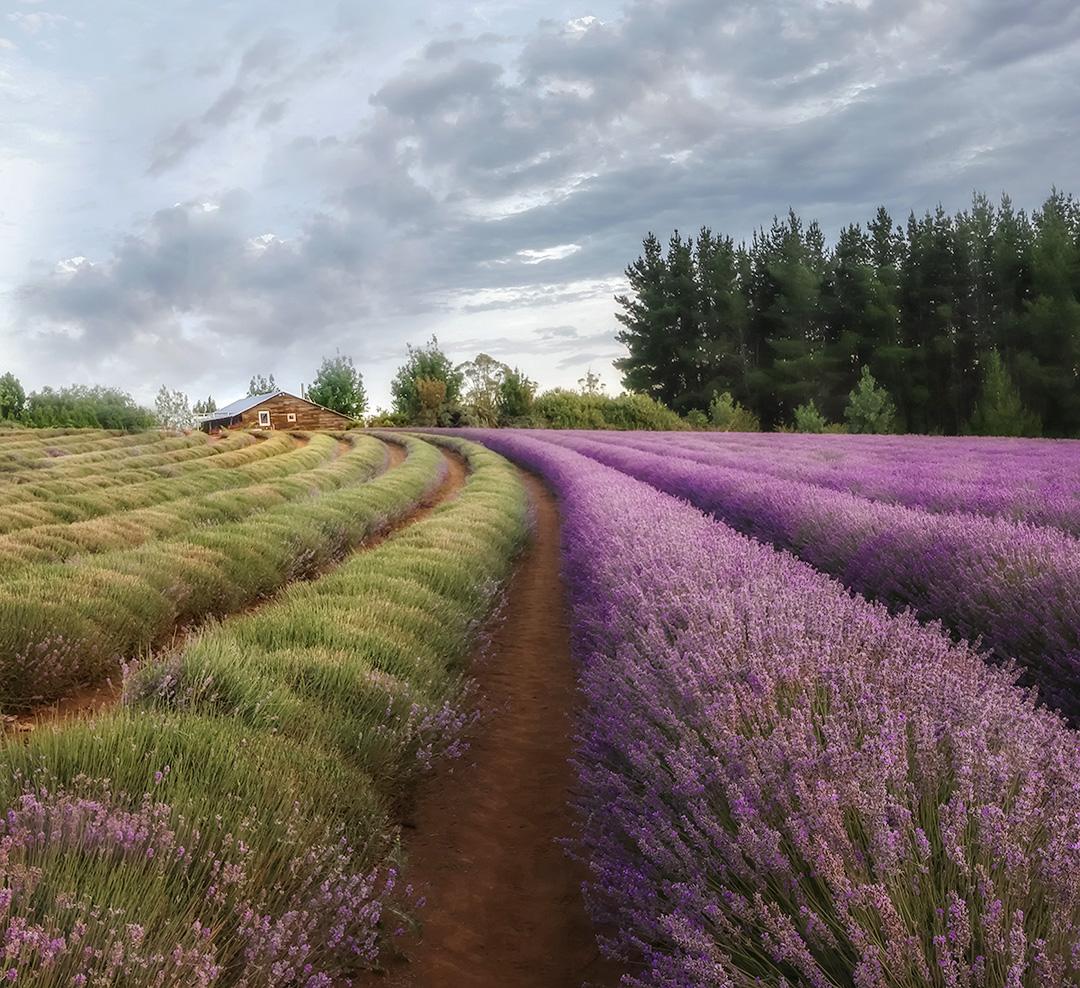 House and Lavender IG.jpg