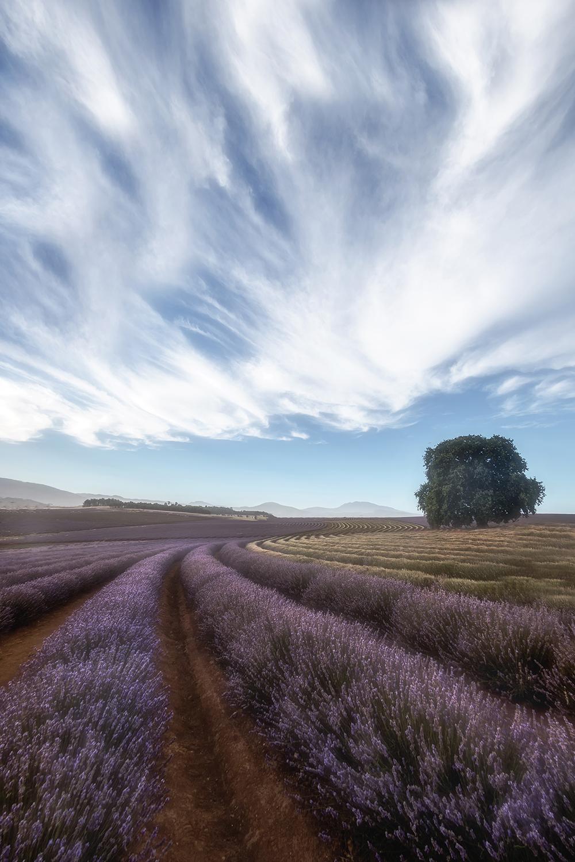 Lavender Tour 2.jpg