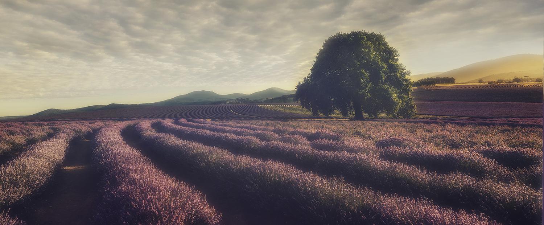 Lavender Tour.jpg