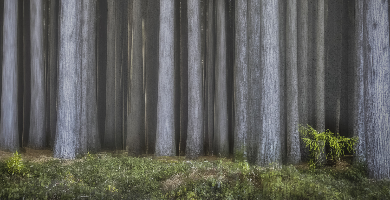 Tall trees and small shrub.jpg