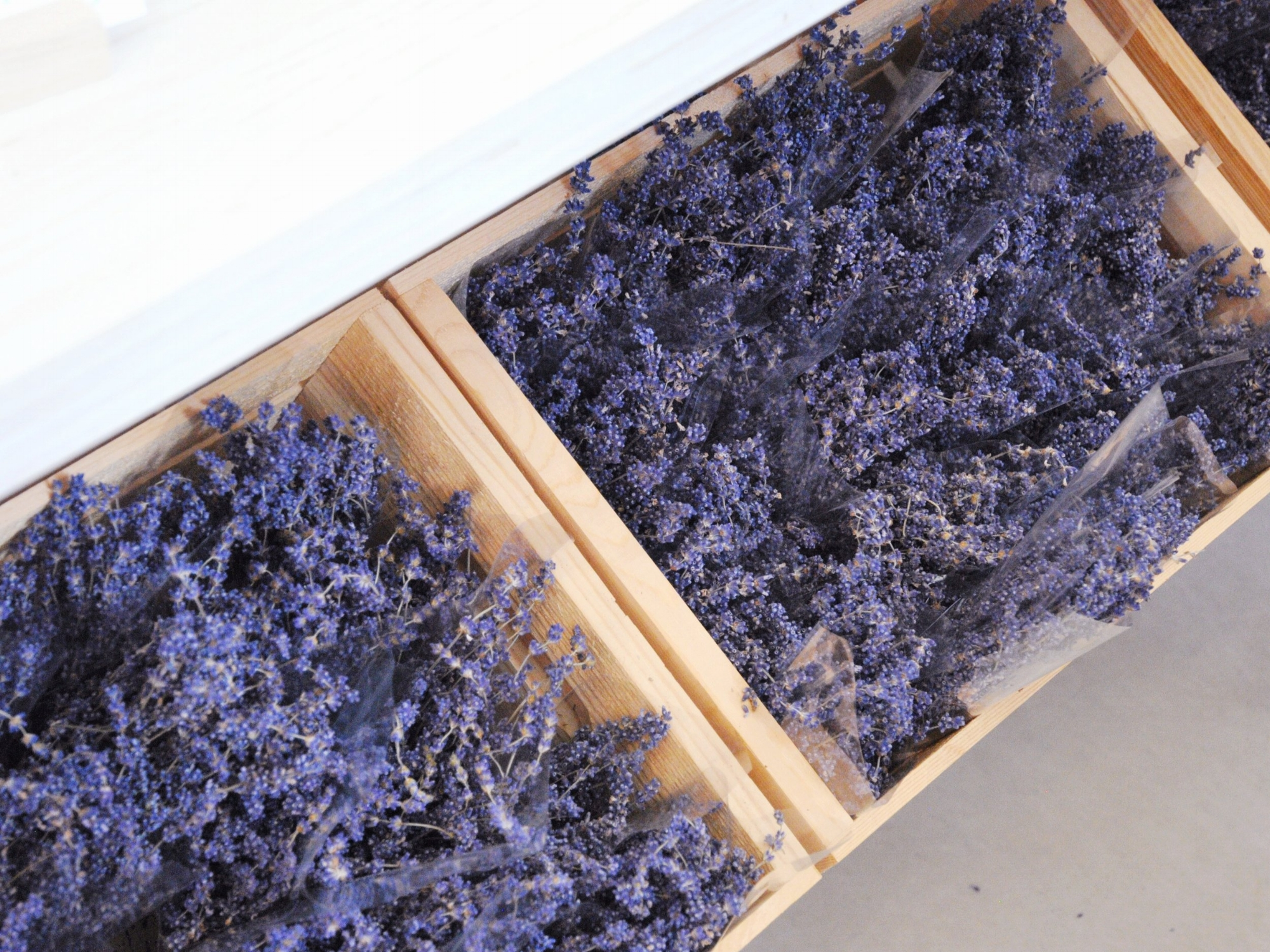 Code Lavender - Rapid holistic support. Well-being.