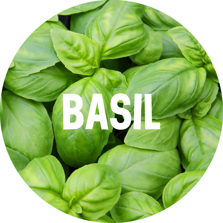 ingredient backgrounds_basil.png
