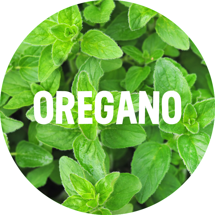 ingredient backgrounds_oregano.png
