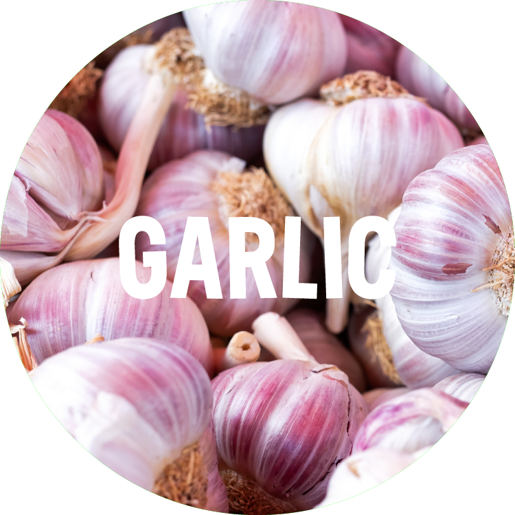 ingredient backgrounds_garlic.png