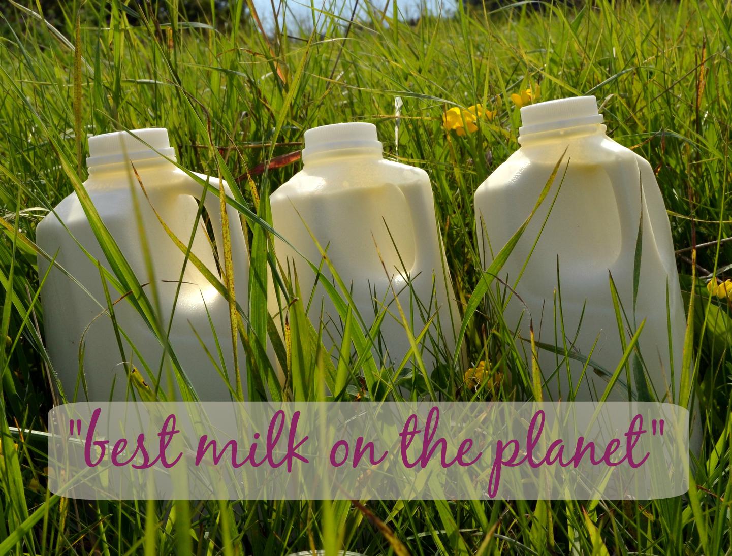 That's how people describe my milk!