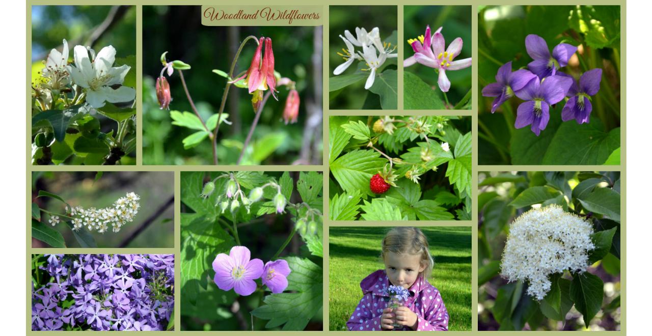 woodland wildflowers 1280x660.jpg