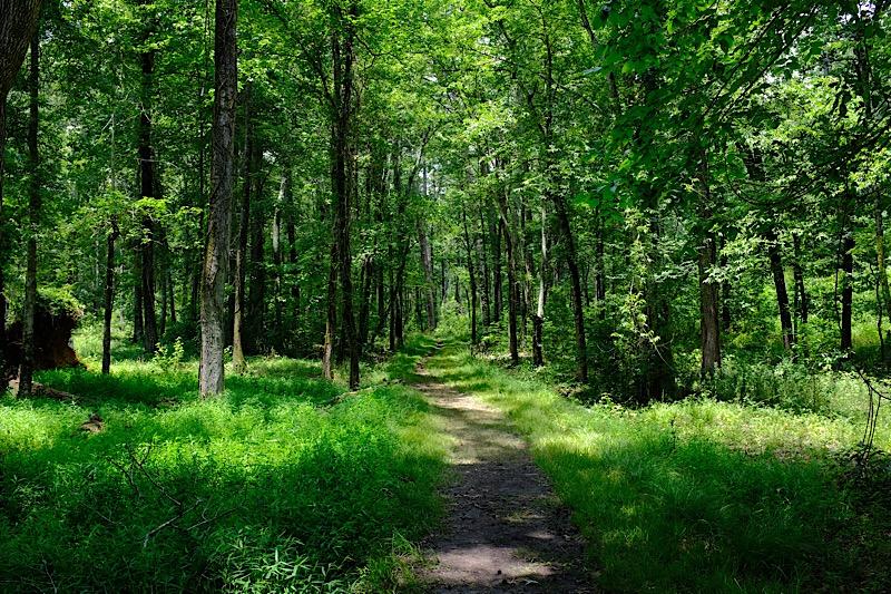 Woodland trail at Chickamauga.