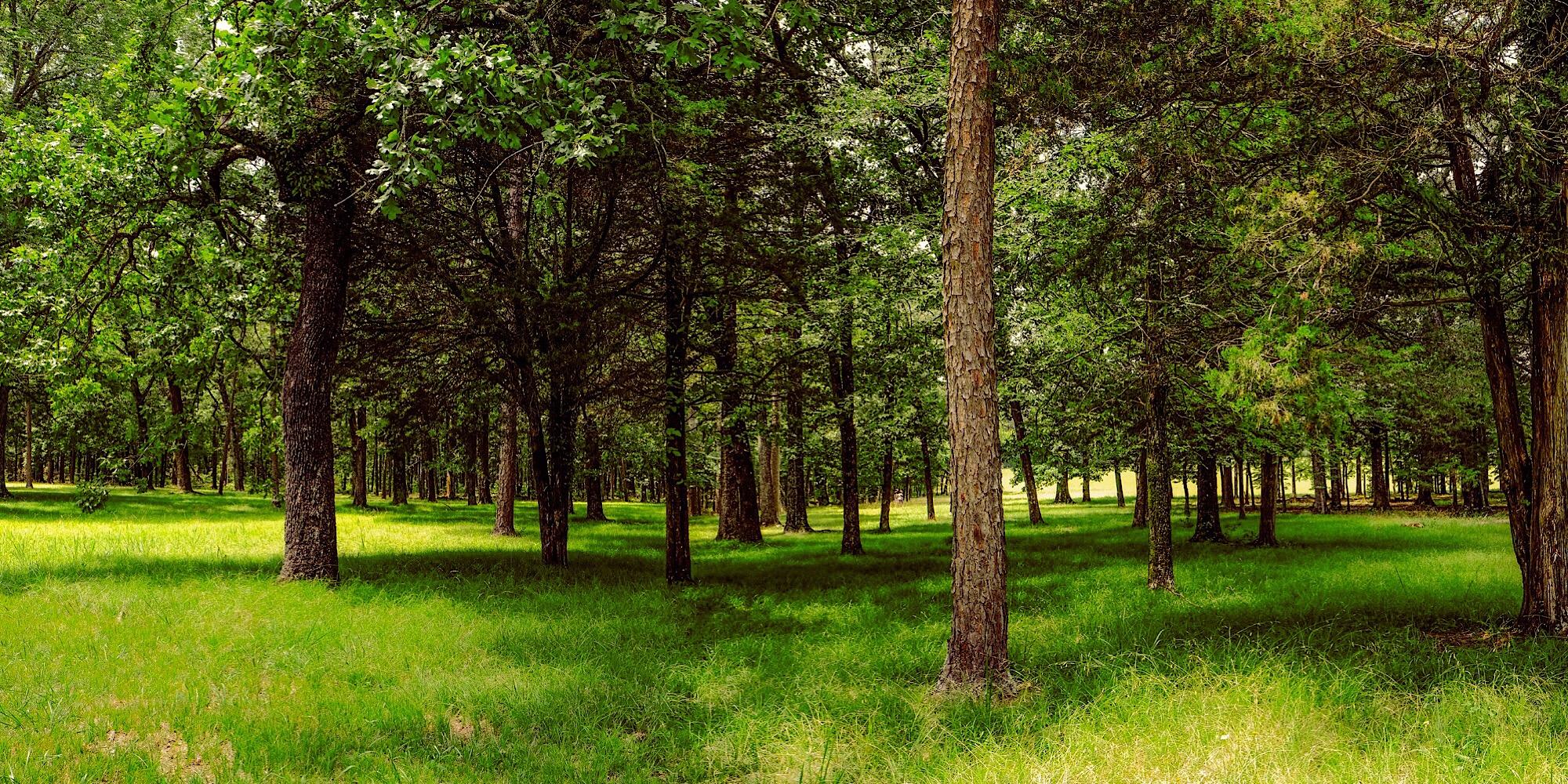 Summer at Chickamauga  composite photograph, (Click to enlarge)