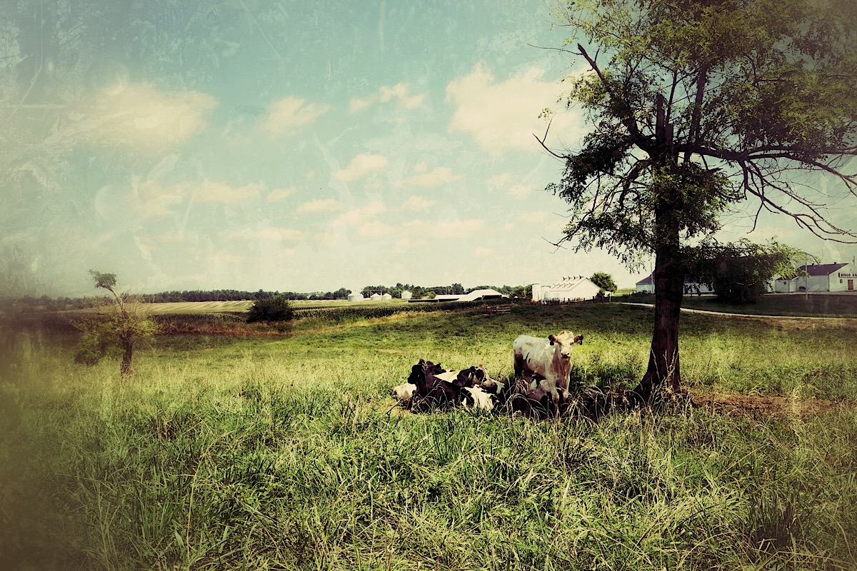 Bucolic Bliss  from the series,  A Southern Sense of Place .