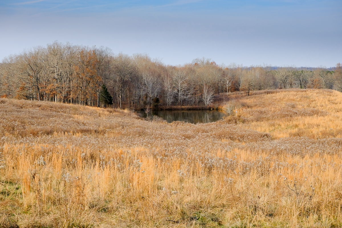 The north Bison and Elk Prairie at Land Between the Lakes. (click to enlarge)