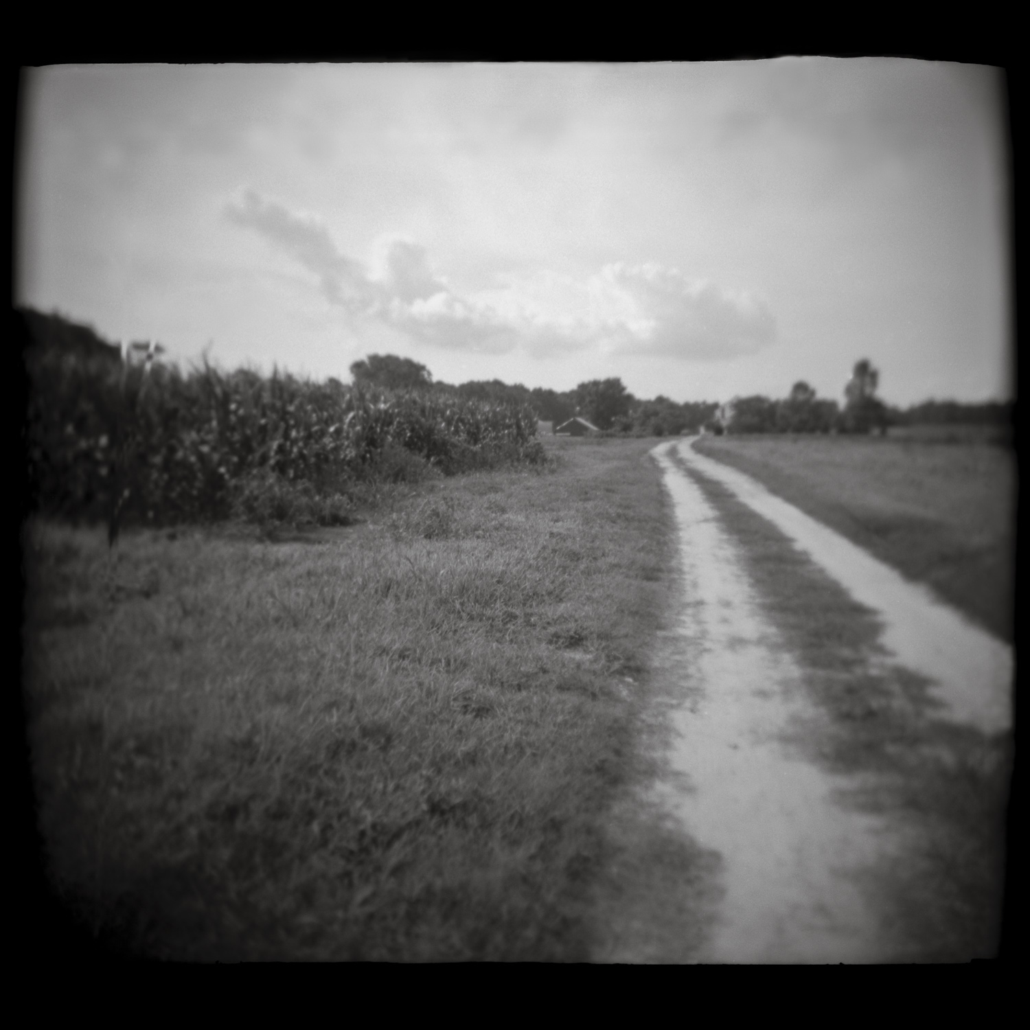F156 N1 HOLGA Maryland farm road DUSTED CLEAN EDGES SQUARE final H40 S45 B65.jpg
