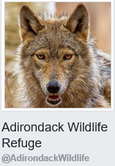 Adirondack Wildlife Refuge facebook logo.png