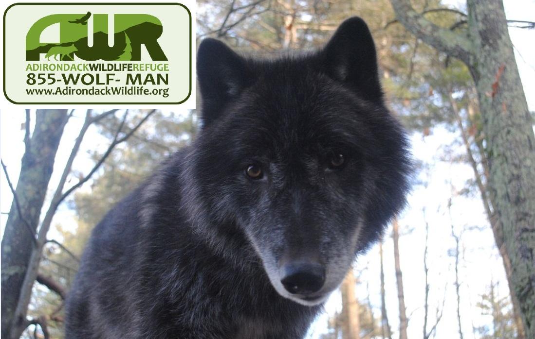 Adirondack wildlife refuge 3.jpg
