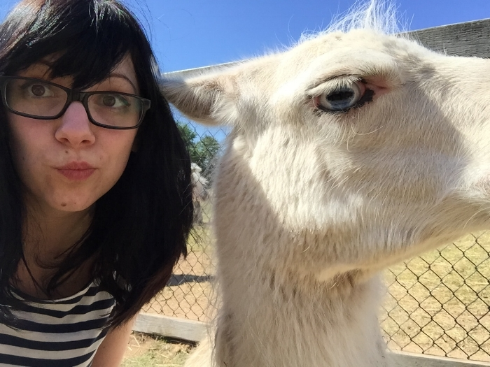 The llama and I have some housekeeping to review...