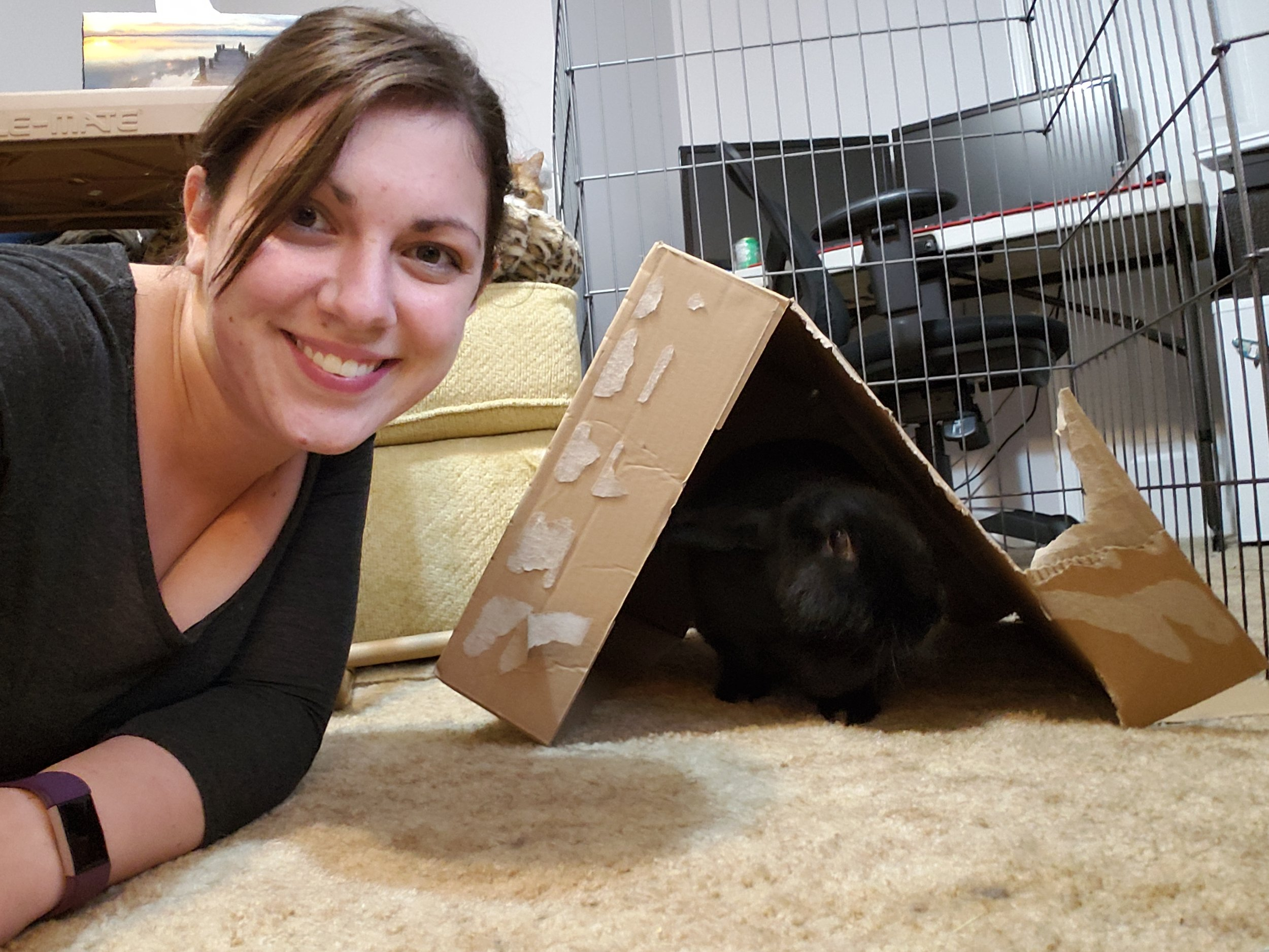 They love chewing on boxes! And using them as houses… And eating their houses.