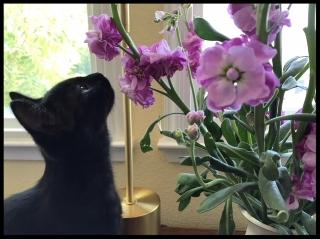 Luna Smelling Phlox.jpg