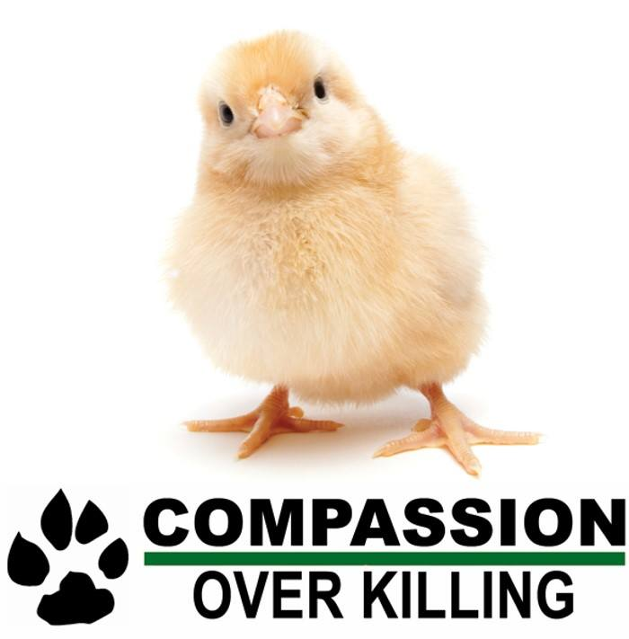 Compassion Over Killing_chicken logo.jpg