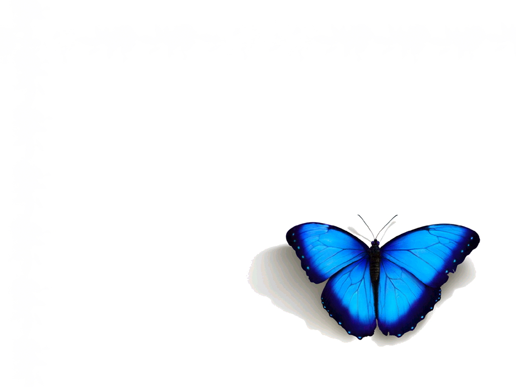 abstract-butterfly-blue-d-art-white-133659.jpg