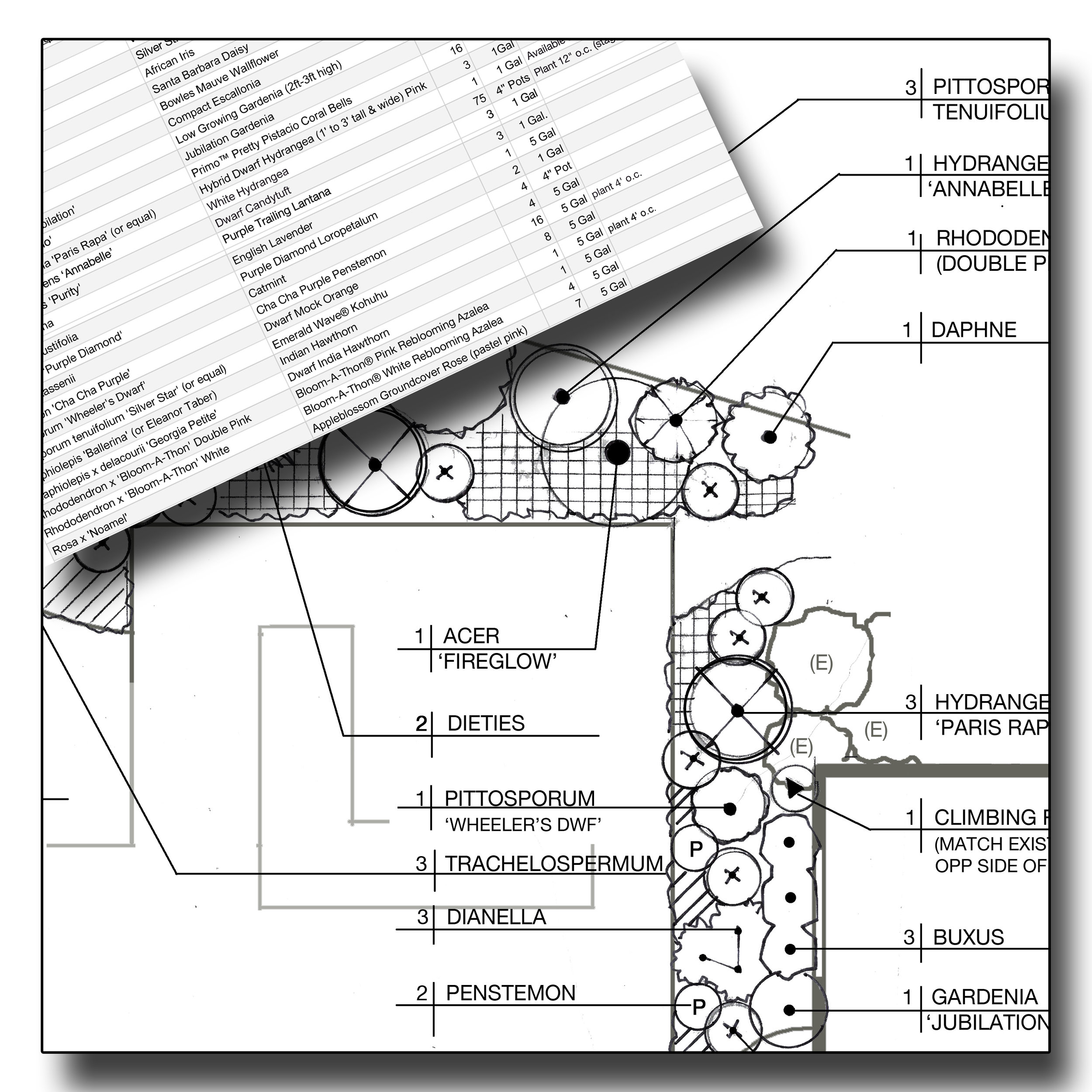 Planting Plan - Once the Master Plan is finalized, I'll prepare a Planting Plan and Plant List which may be used by a landscape contractor to design an irrigation system and install the planting. The planting plan and list specify precise plant locations, botanical and common names, plant quantities, container sizes, and basic planting specifications.