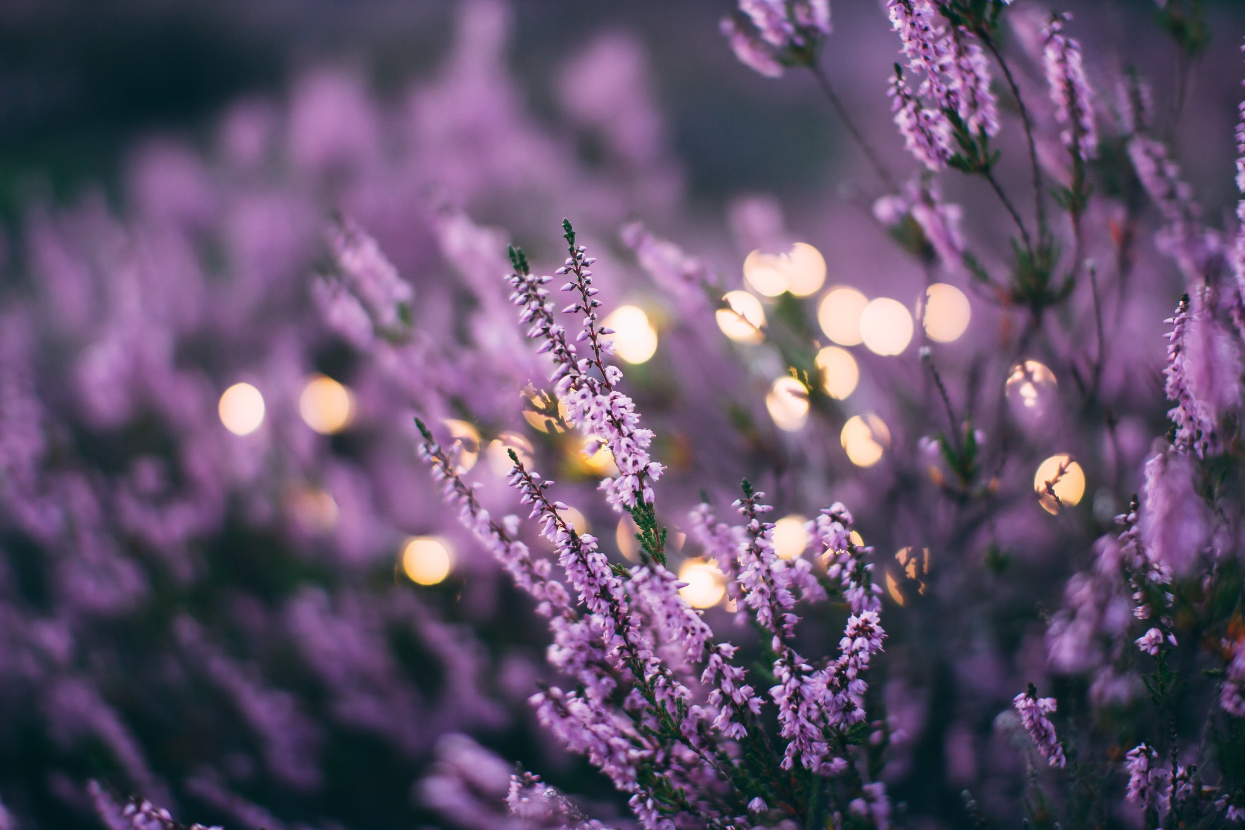 Lavender - An aromatherapy favorite! Choose this essential oil for relaxation. Also great for the skin.