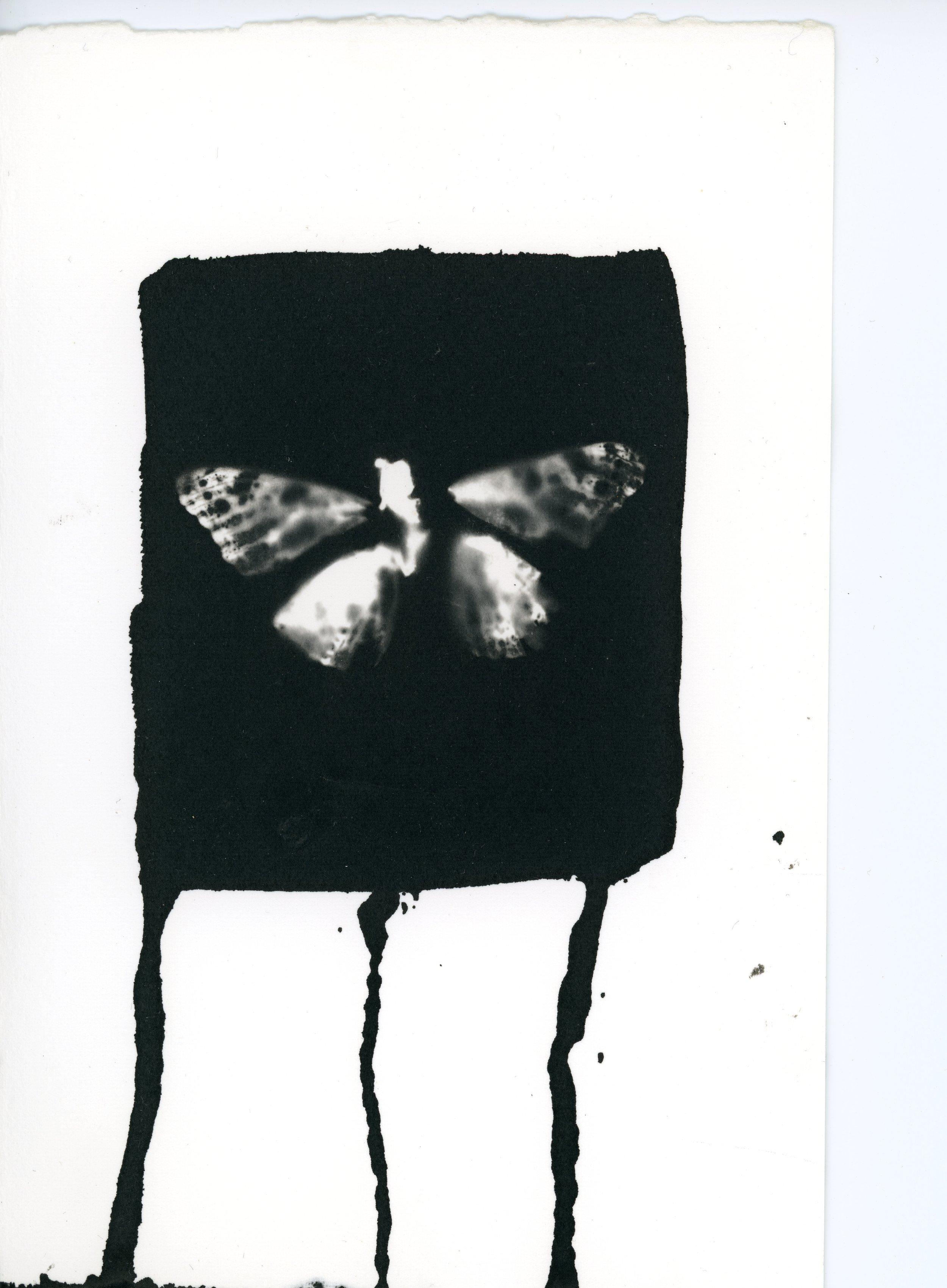 Butterfly_17.jpg