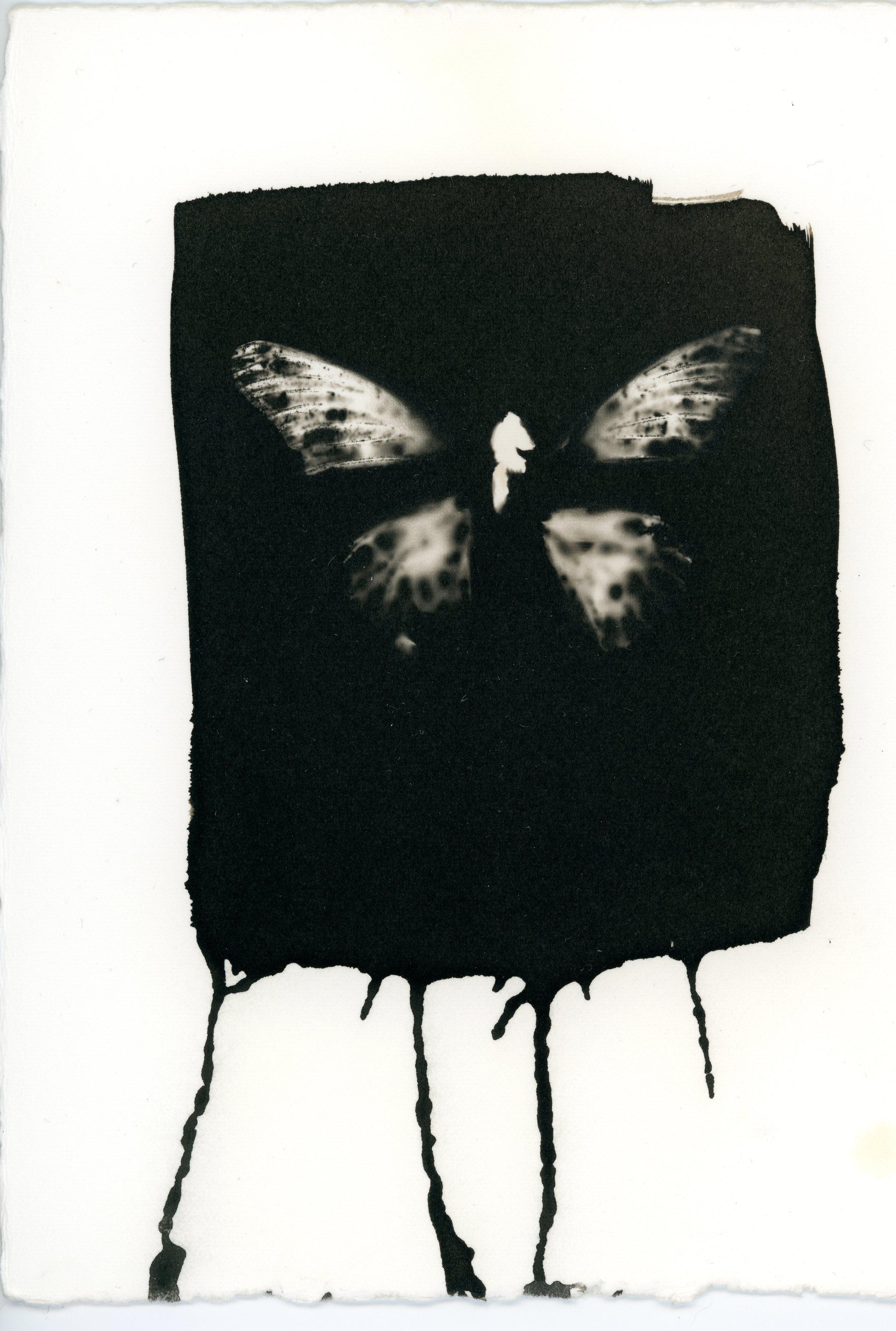 Butterfly_19.jpg