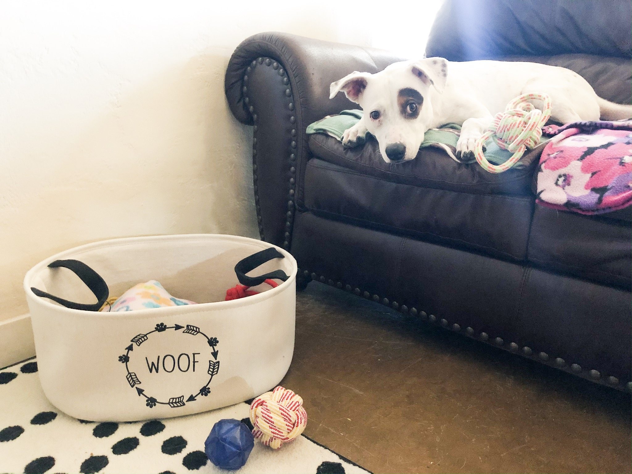 Woof Dog Bag