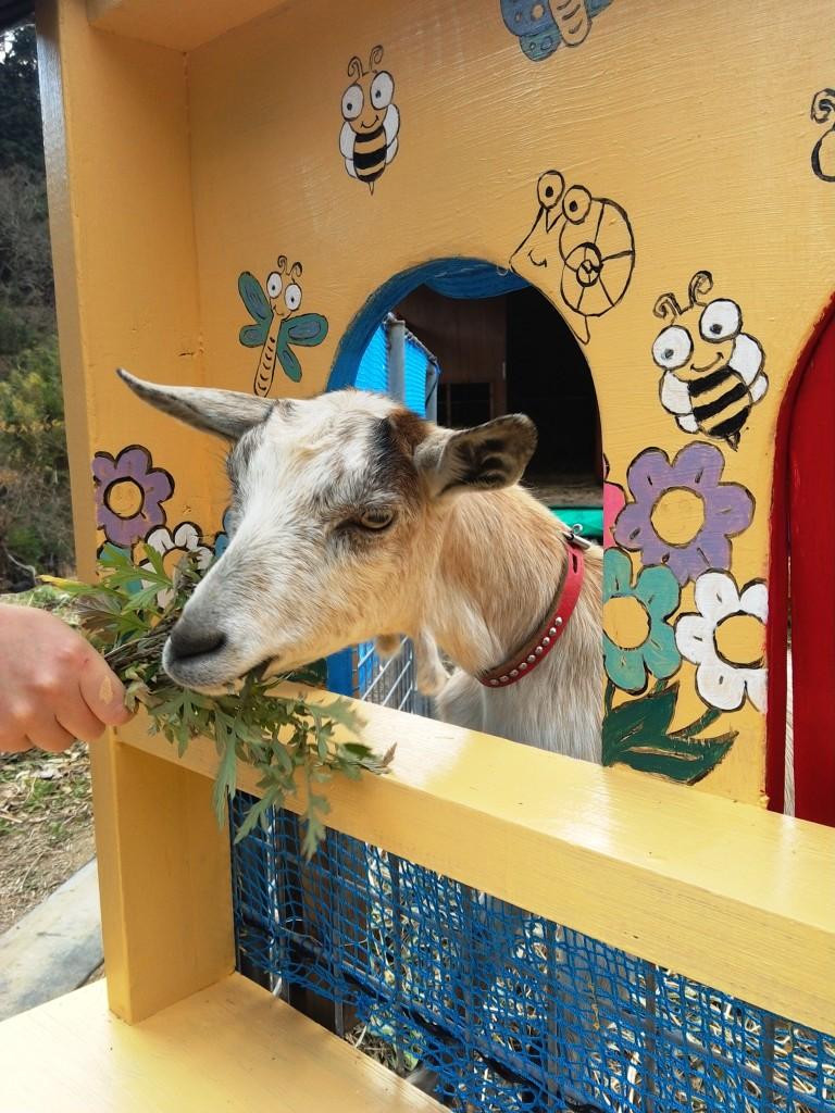 Mocha feeding 2.jpg