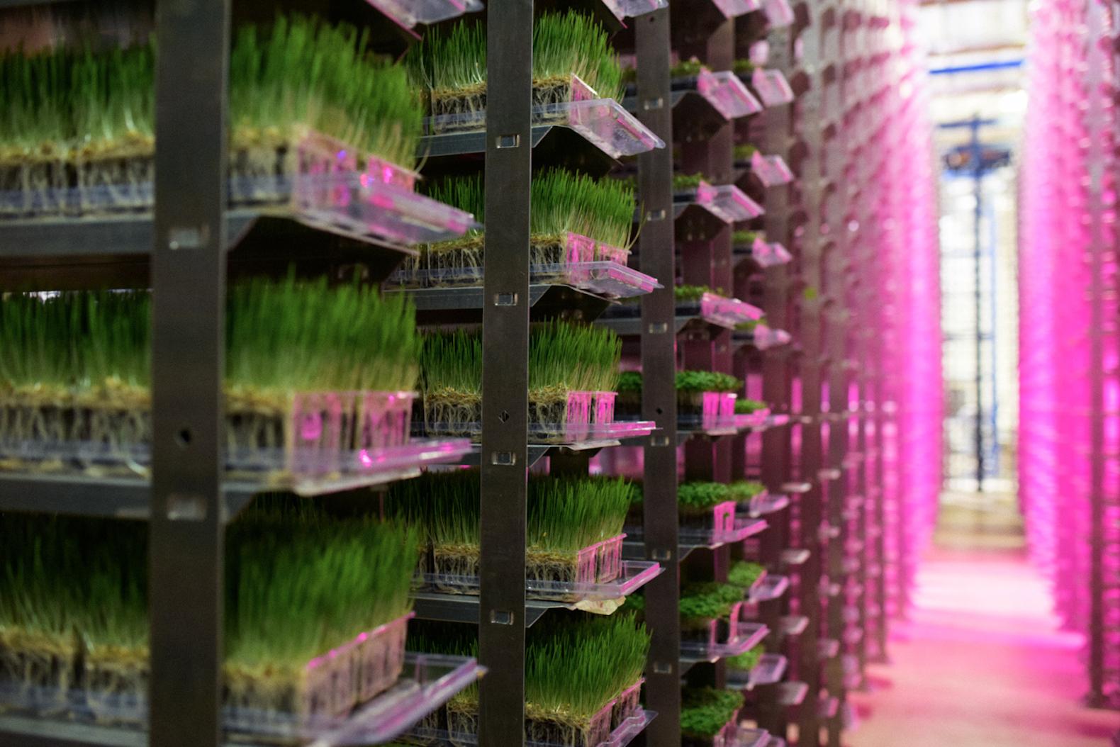 Urban-Produce-Indoor-Vertical-Garden.jpg