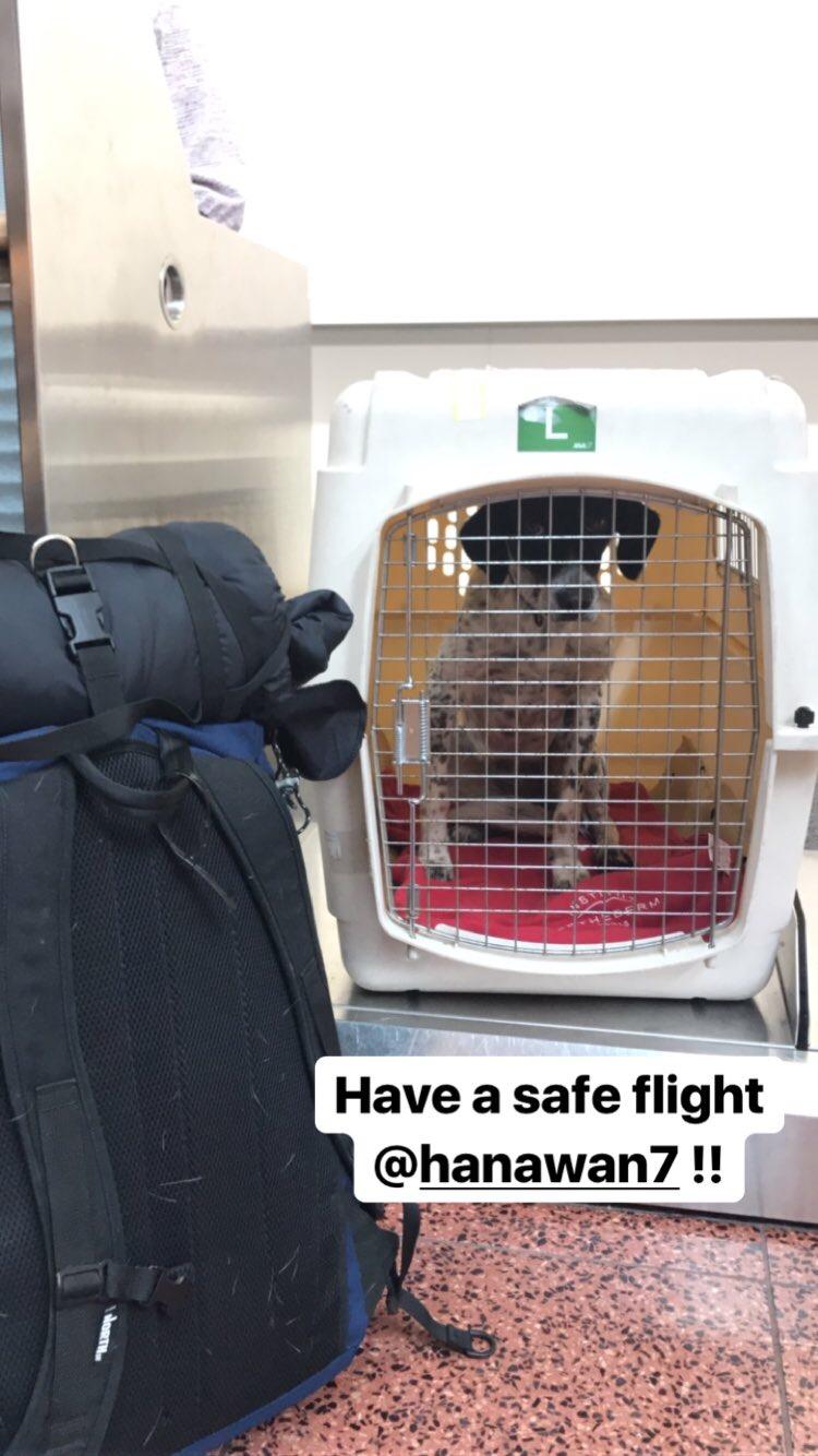 今回はなんと犬も飛行機で連れて行きました。ANA便で別途6000円で乗せる事ができました。カウンターまで一緒に行って、専用のケースに入れられて、バイバイ。受け取りは係員さんが丁寧に運んできてくれました。ちゃんとした航空会社のサービス最高。
