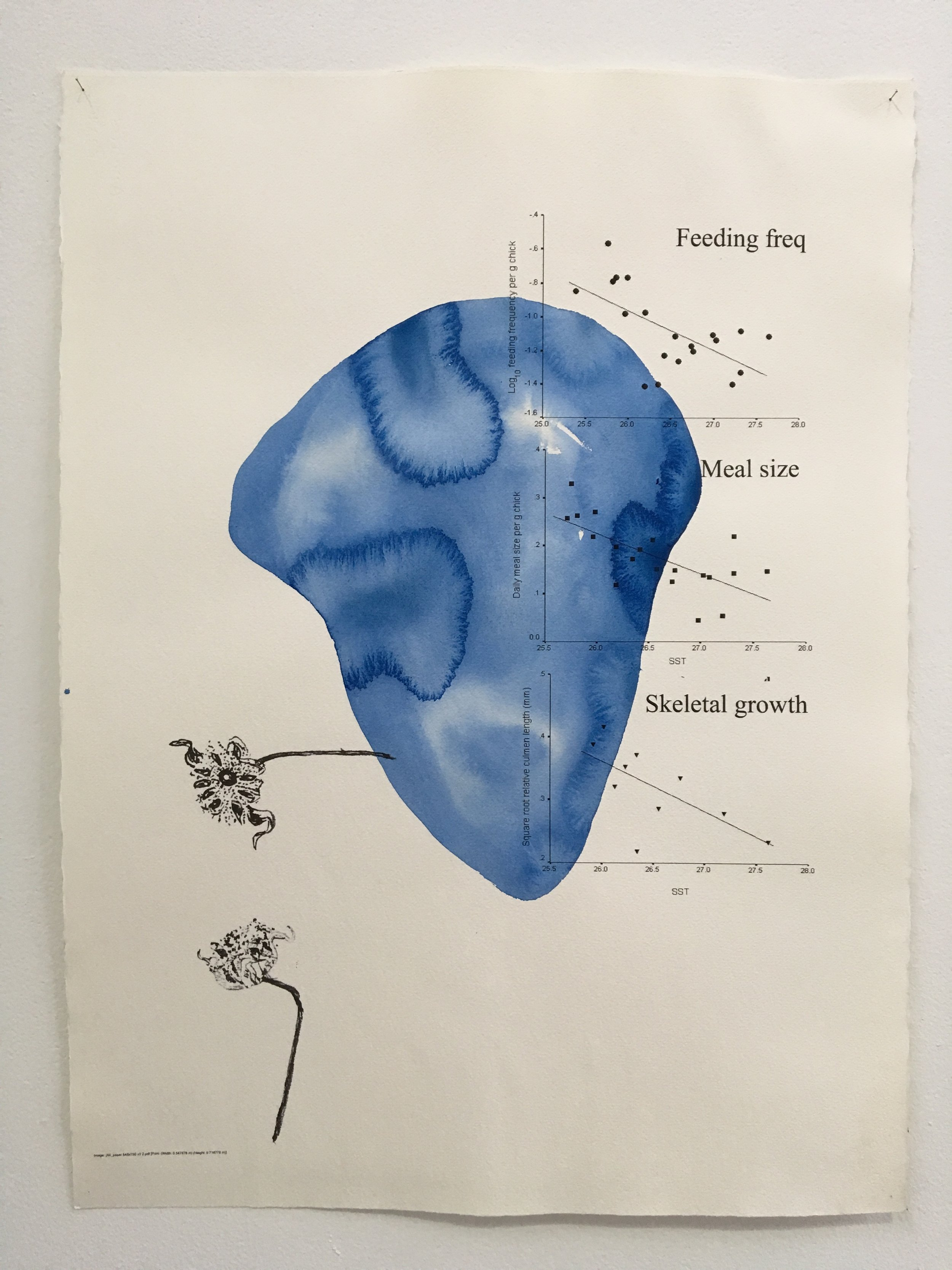 Judy Watson heron island 1 2009-16 acrylic and digital print on paper 77 x 57 cm.jpg