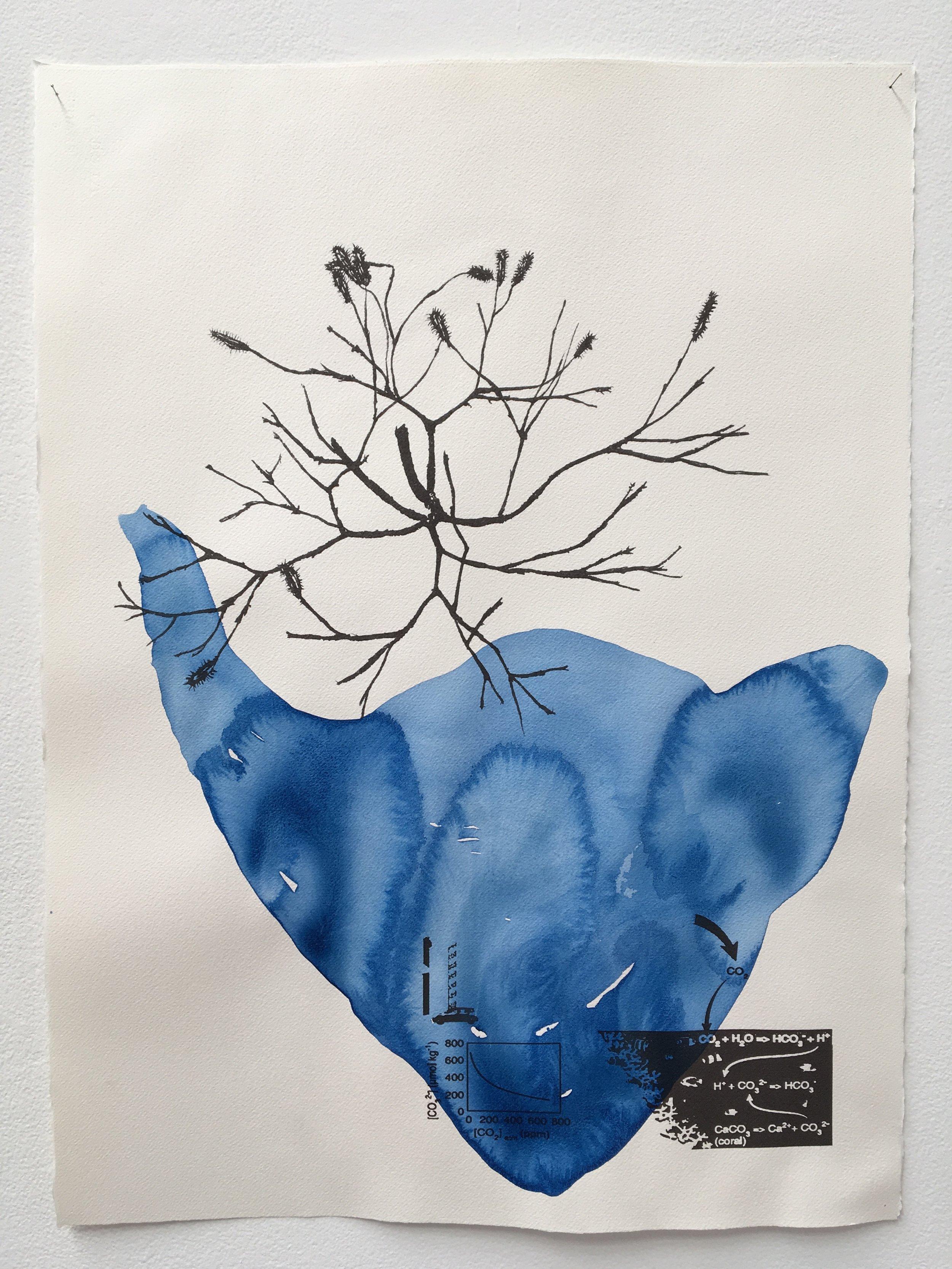 Judy Watson heron island 11 2009-16 acrylic and digital print on paper 77 x 57 cm.jpg