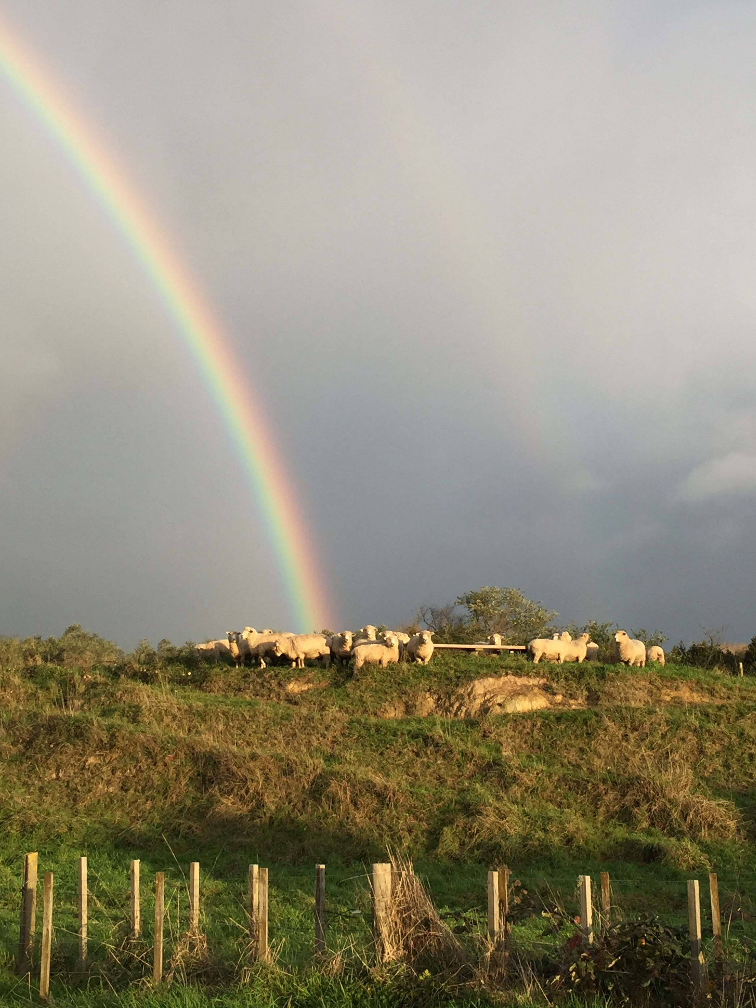 Double rainbow over the flock, 6 July