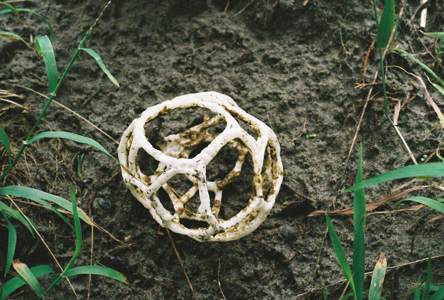 Fungi at Kuku
