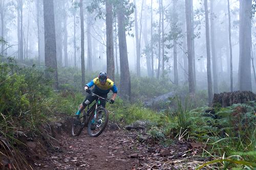 Hollybank Mountain Bike Park