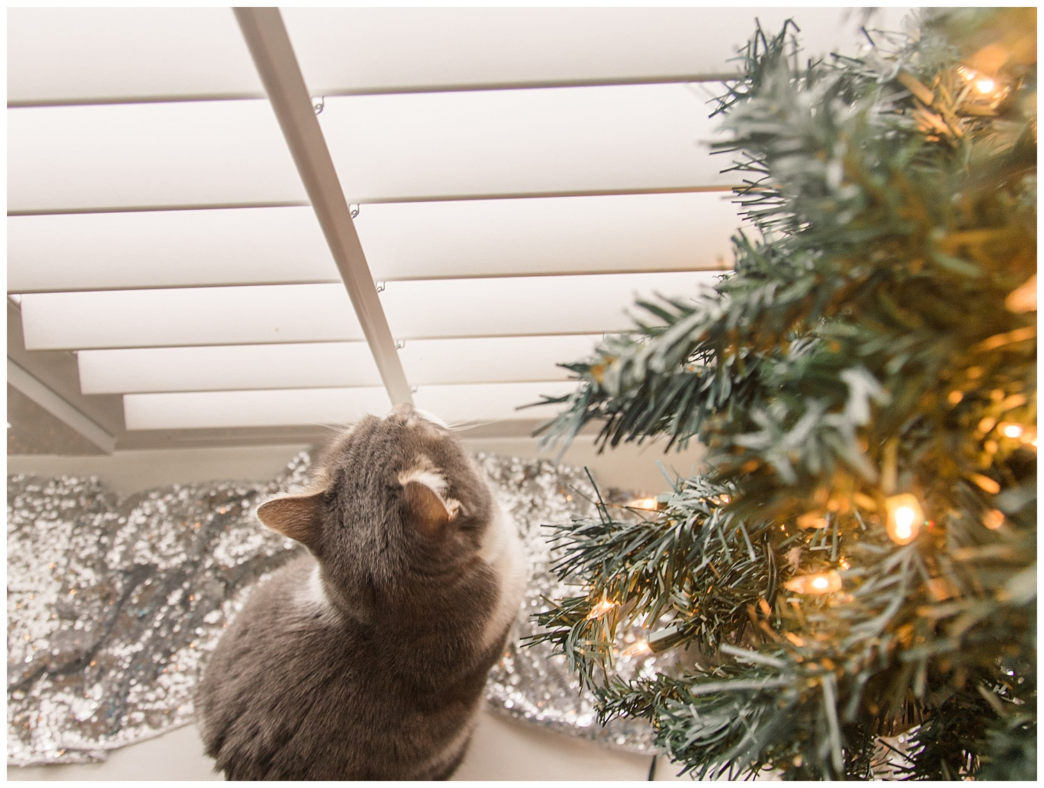 Cat Admires Christmas Decor