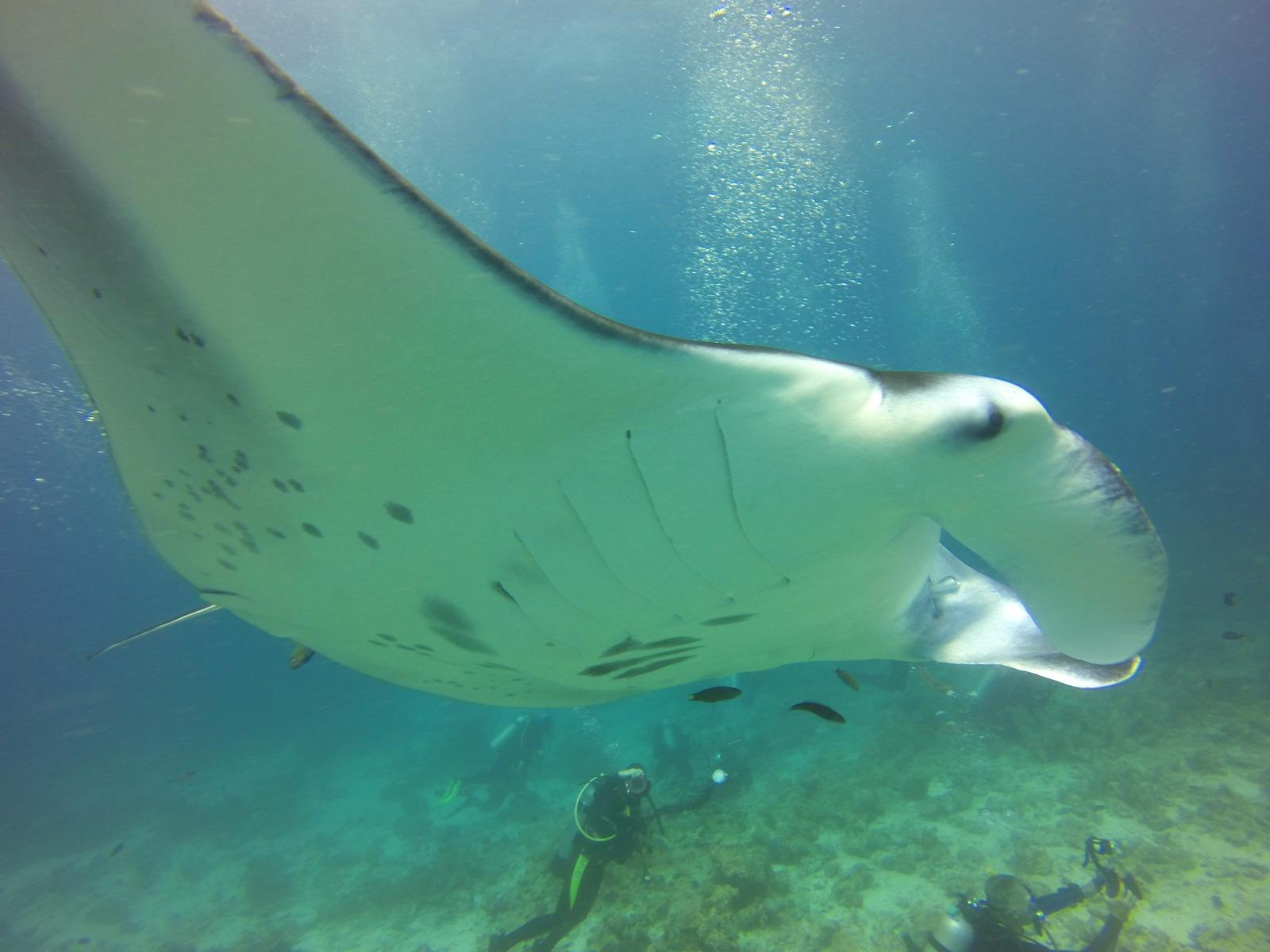 Maldives Central -