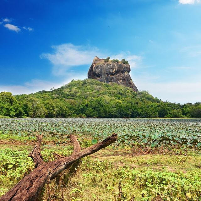 "[10 of 24] UNESCO World Heritage Site is Sigiriya Rock Fortress which sits on top of a 180m tall protruding mountain.  The ruins of the capital built by the King Kassapa I (477–95) after he killed his father.  This place is special because Sigiriya also has its ""mirror wall"" and its frescoes depicting the King's wives and concubines. . . . #sustainabletravel #responsibletravel#travelbetter #traveldeeper#changethewayyoutravel#conscioustravel #chickenfeettravels @destination_srilanka @srilanka @exploresrilanka @iamsrilanka @hashtagsrilanka #srilanka #chickenfeettravelssrilanka . . . Re-introducing most #UNESCO#unescoworldheritage sites found in #southeastasia over the next few weeks! If you haven't been to any or all of these, let's do it 2019!"