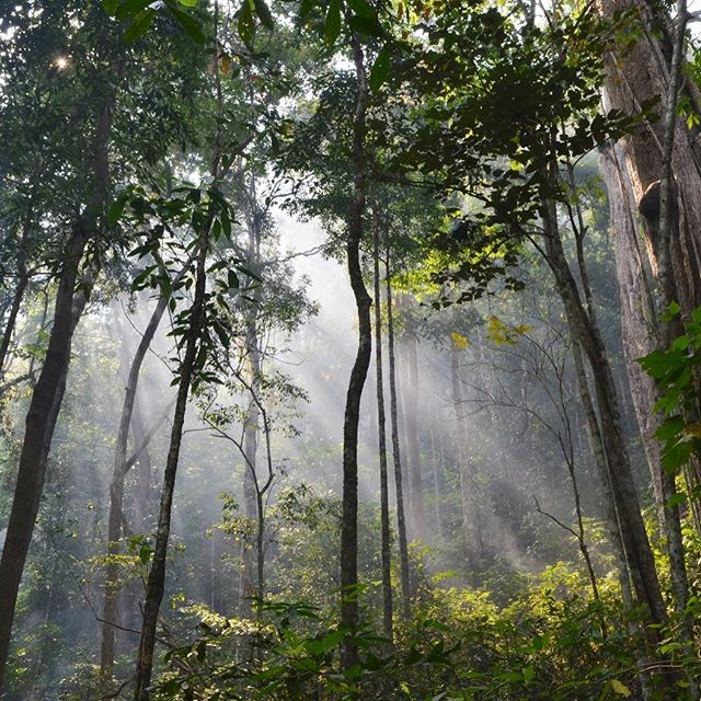 [11 of 24] UNESCO World Heritage Site is the Dong Phayayen-Khao Yai Forest Complex JUST OUTSIDE of Bangkok.  This area is protected to keep over 800 different species from losing their homes; including close to 20 endangered and vulnerable species. . . #sustainabletravel #responsibletravel#travelbetter #traveldeeper#changethewayyoutravel#conscioustravel #chickenfeettravels @thailandinsider @tourismthailand @amazingthailand @tatsingapore #chickenfeettravelsthailand #jungle #jungletrekking #sunbeams . . . Re-introducing most #UNESCO#unescoworldheritage sites found in #southeastasia over the next few weeks! If you haven't been to any or all of these, let's do it 2019!
